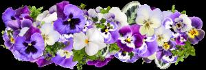 flowers-2058090_1280